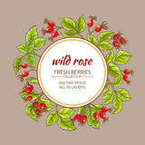 Wild rose vector frame. On color background Royalty Free Stock Photo