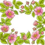 Wild rose vector frame. On white background stock illustration