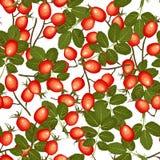 Wild rosehip vector seamless pattern