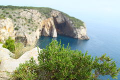 Wild rosemary/Rosmarinus officinalis. Photo of a wild rosemary/Rosmarinus officinalis plant with a Mediterranean coast background Stock Photo