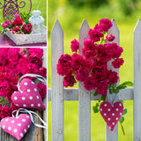 Wild roses collage Royalty Free Stock Image