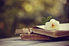Wild roses on the open books on a wooden table stock photography
