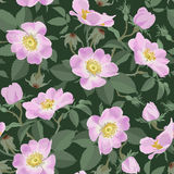 Wild roses - seamless pattern Royalty Free Stock Images