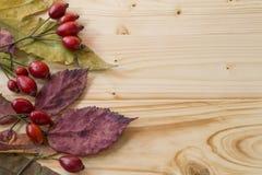Wild rozenfruit stock fotografie