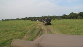 Wild Safari National-park in Sri Lanka stock afbeeldingen