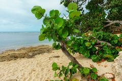 Wild sandy beach with green deciduous plants. Nature reserve, natural reserve, nature preserve, wildlife sanctuary Stock Image