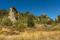 Wild Sardinige Stock Fotografie