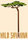 Wild savanna sign with tree Royalty Free Stock Photo