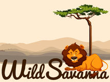Wild Savanna theme with lion and tree Stock Images