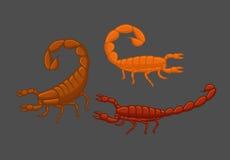 Wild Scorpions Stock Image