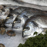 The Wild sea bass for sale at Borough Market, London Stock Image