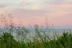 Wild sea grass colorful sunset sky ocean. Wild sea grass colorful sunset sky Atlantic ocean Royalty Free Stock Images