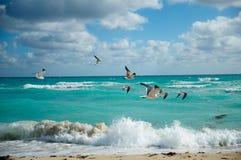 Seagulls flight over beach Royalty Free Stock Photo