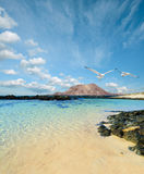 Wild seashore in Fuerteventura Royalty Free Stock Photo