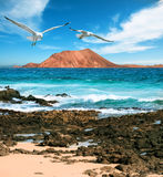 Wild seashore in Fuerteventura Stock Photo