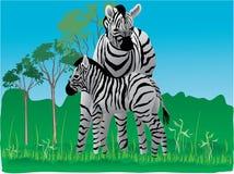 wild sebra royaltyfri illustrationer