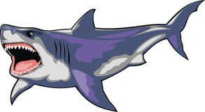 Wild shark isolated Stock Photography