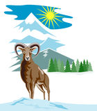 Wild sheep with mountain Stock Images