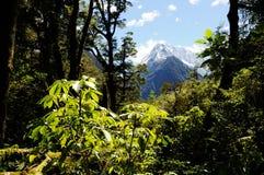 Wild skog Arkivbilder