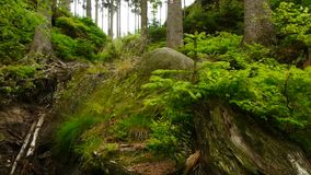 Wild skog lager videofilmer