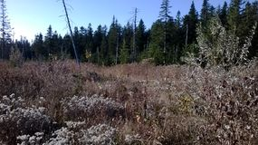 Wild skog Royaltyfri Bild