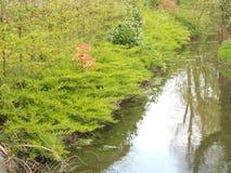 wild skogflod Royaltyfria Bilder