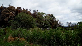 Wild skogland Sri Lanka Arkivfoton