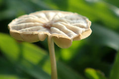 Wild small mushroom Stock Images