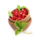 Wild small strawberries in a wooden bowl with leaves. Royalty Free Stock Photo
