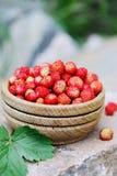 Wild small strawberry Stock Photos