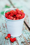 Wild small strawberry Stock Photography