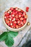 Wild small strawberry on the stone Stock Photos