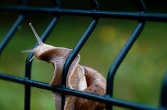 The wild snail Stock Photos