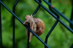The wild snail Royalty Free Stock Photos