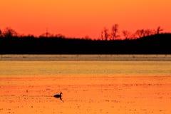 wild solnedgång arkivfoton