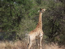 Wild South Africa Stock Photo