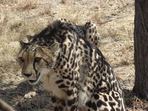 Wild South Africa Royalty Free Stock Photo