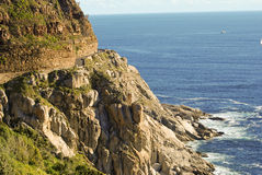 Wild South African coast line full of wild flowers Royalty Free Stock Photography