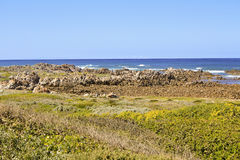 Wild South African coast line full of wild flowers Stock Image