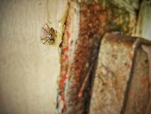 Wild Spider. Arthropods with Fangs royalty free stock photo