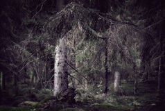 Wild spooky forest Stock Images