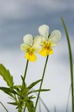 Wild spring flowers Royalty Free Stock Photo