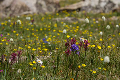 Wild spring flowers Stock Photography