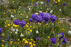 Wild spring flowers Stock Photo