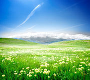 Wild spring flowers. On a green meadow Stock Image