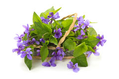Wild spring flowers. Violet flowers in basket.  on white background Stock Photo