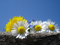 Wild spring flowers on wooden log, against blue sky Royalty Free Stock Photo