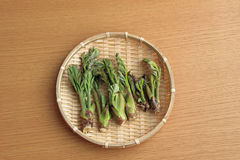 Wild spring of spring, bud of cod. Spring grass, it is cod bud. Salad is delicious for Tempura Stock Photography