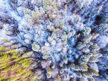 Color Forest and the First Snow. Aerial View Stock Photography