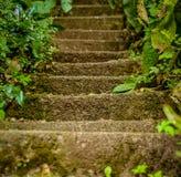 Wild Stairway Royalty Free Stock Photos